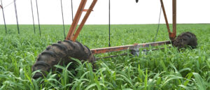 coverpage-covercrop